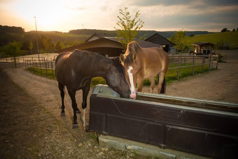 Pferdetränke beim Aktivstall Gubler