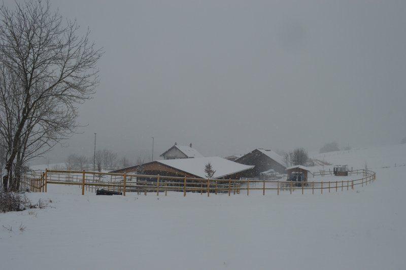 Wintermärchen im Aktivstall Gubler